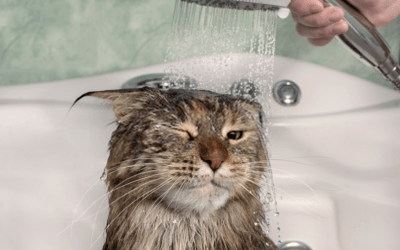 why do cats hate water (TIPS & TECHNIQUES) (10 best benefit and drawbacks)