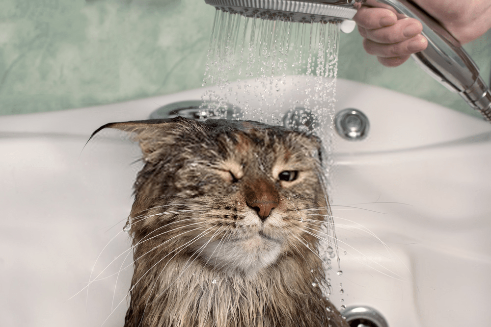 why do cats hate water (TIPS & TECHNIQUES)