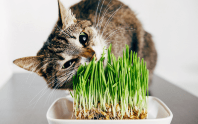 why do cats eat grass (TIPS & TECHNIQUES)