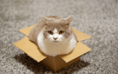 why do cats like boxes (TIPS & TECHNIQUES) (10 best benefit and drawbacks)
