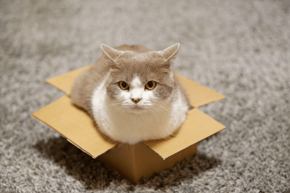 why do cats like boxes (TIPS & TECHNIQUES)